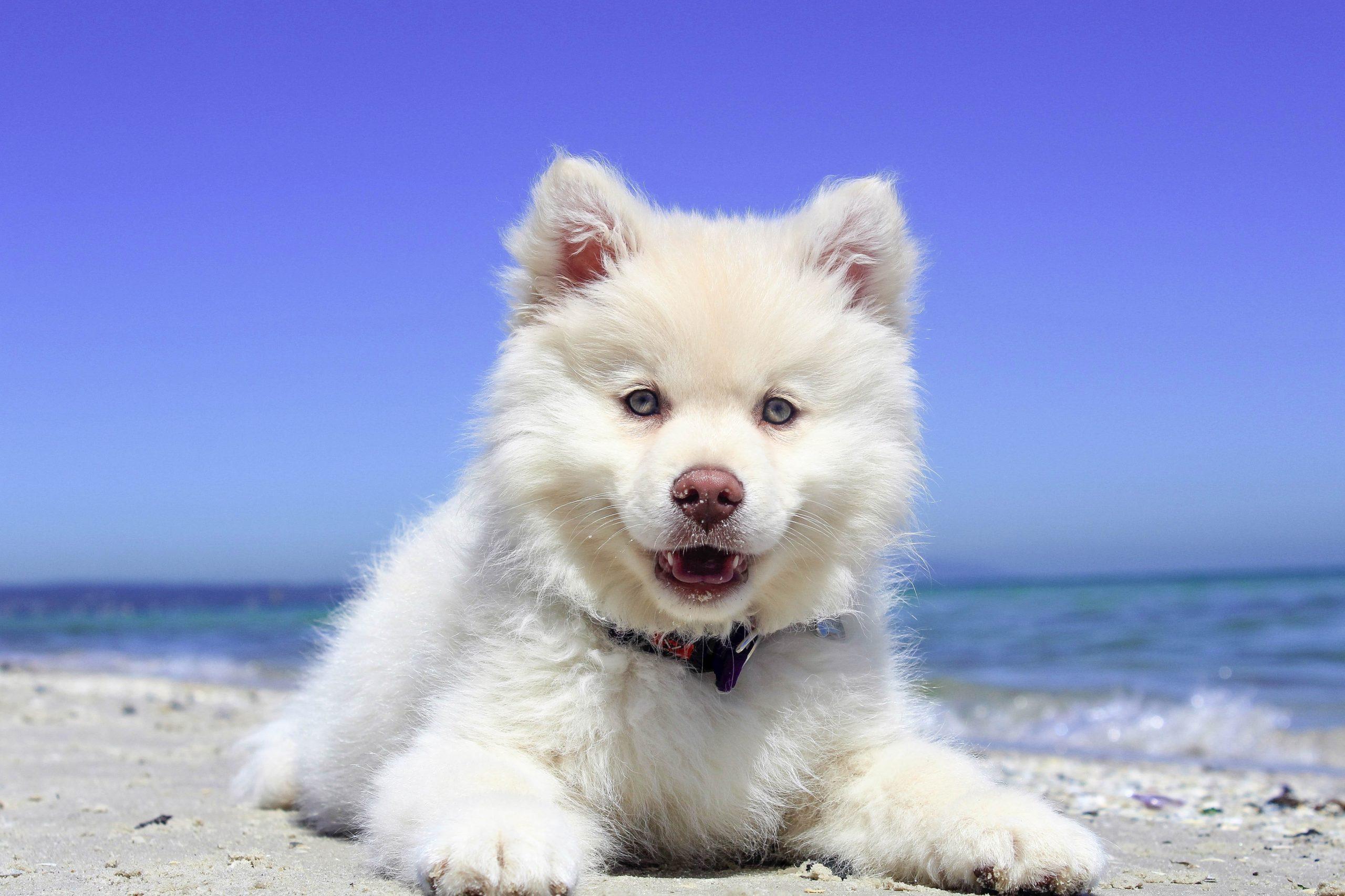 un chien heureux sur la plage